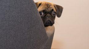 Ratgeber: Hund am Arbeitsplatz